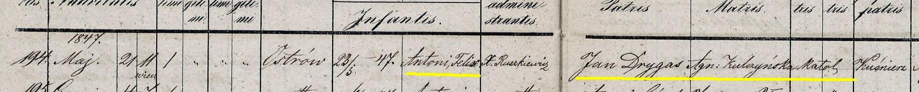 Fot 3. Zapis z księgi parafialnej o urodzeniu i chrzcie Antoniego Feliksa Drygasa.